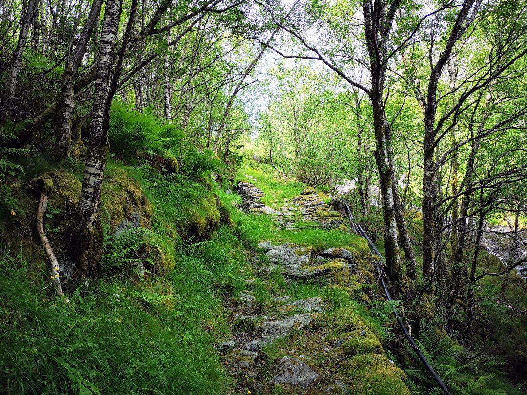 Vegen gror til med mose og trær